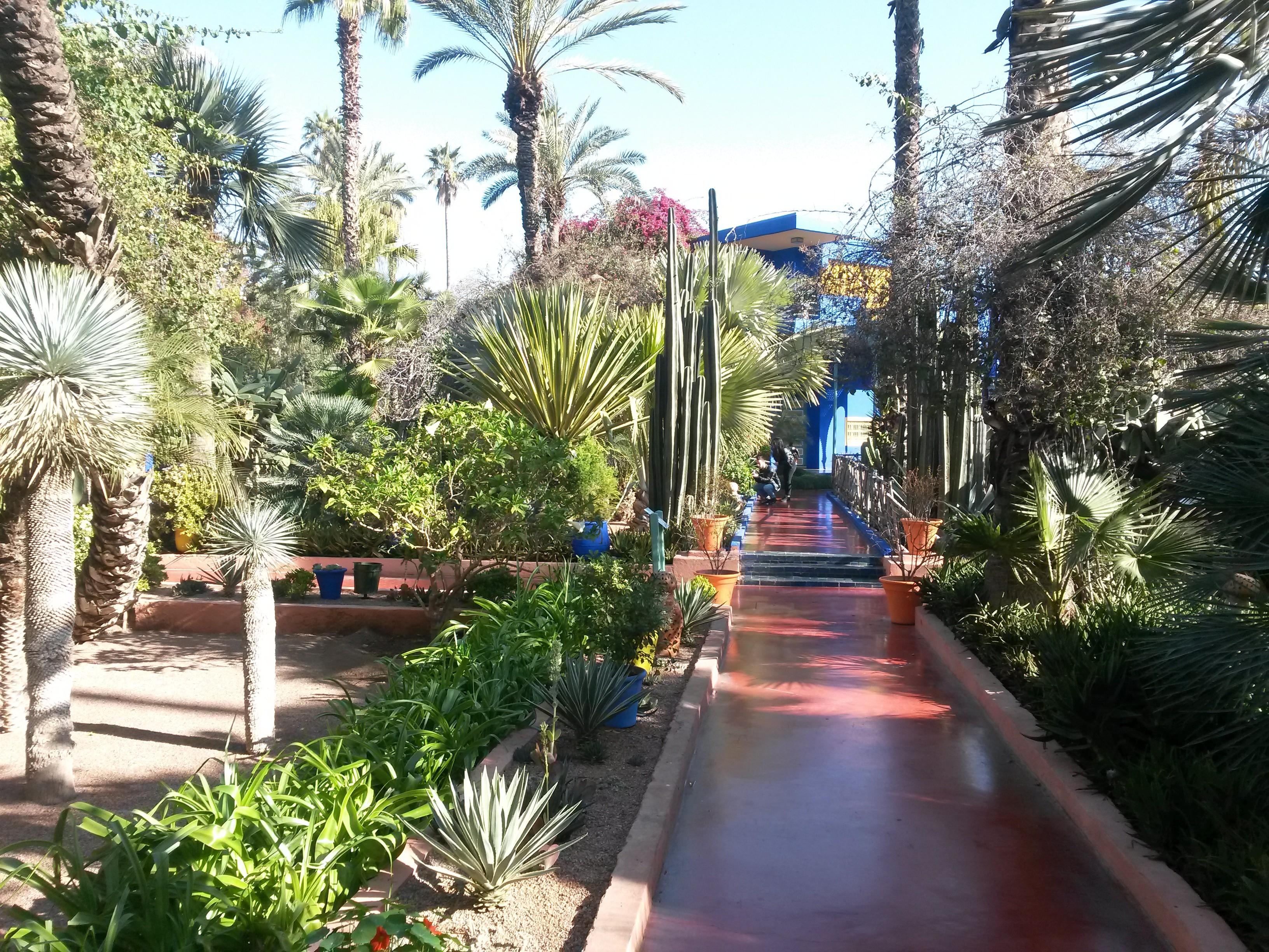 1-semaine-a-marrakech-maroc-jardin-majorelle